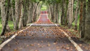 A road covered in leaves. Featured image for the best walk behind leaf blowers article.