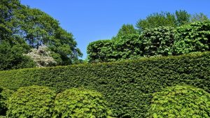 Hedge Pruning Guide Featured