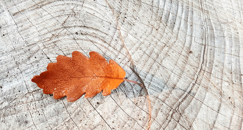 How to get rid of garden leaves featured image.