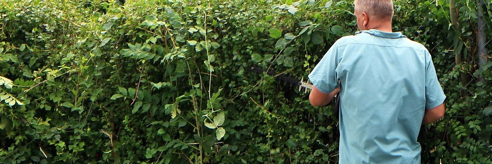 Best Electric Hedge Trimmers Buyers Guide.