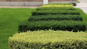 Best hedge shears featured image.
