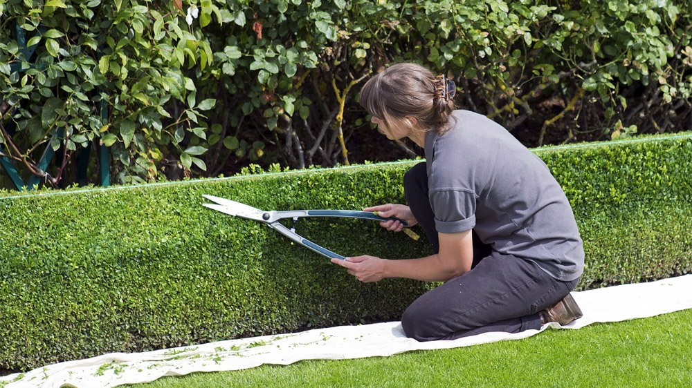 How to sharpen hedge shears featured image.