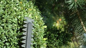How to sharpen hedge trimmers featured image.