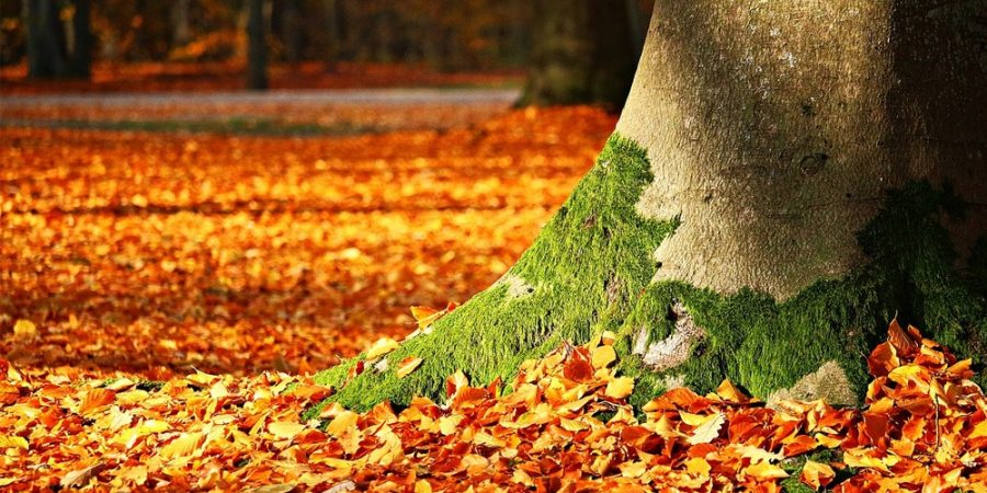 Featured image for the benefits of walk behind leaf blowers post.