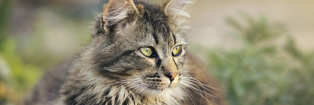 Ways to keep cats off your garden naturally