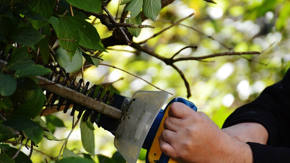 Best cordless hedge trimmer featured image