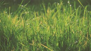 A picture of long grass for the corded electric string trimmers featured image.