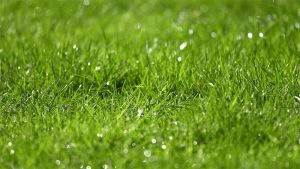 When is the best time to water your lawn featured image.
