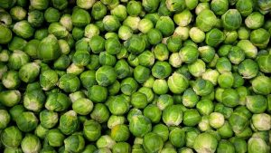 How to Grow Brussel Sprouts Featured Image