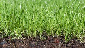 how much to water new grass seed featured image